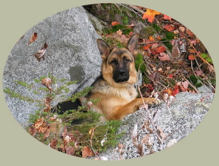 Welcome to Hollow Hills/ vom hohlen H�gel German Shepherds.